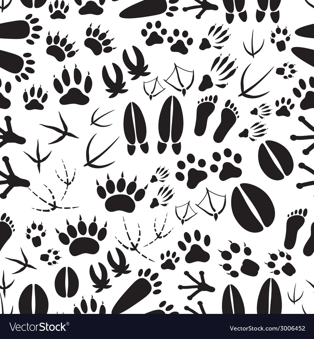 Animal footprints black and white seamless pattern vector
