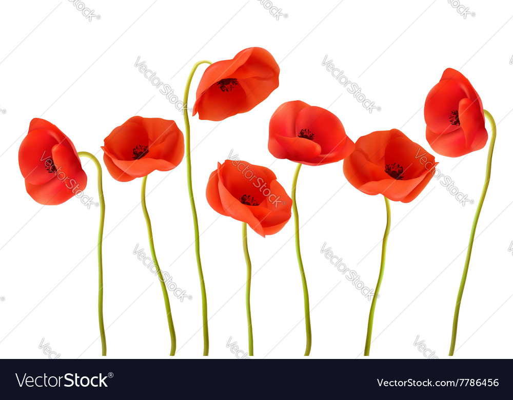 Nature background with red poppies vector