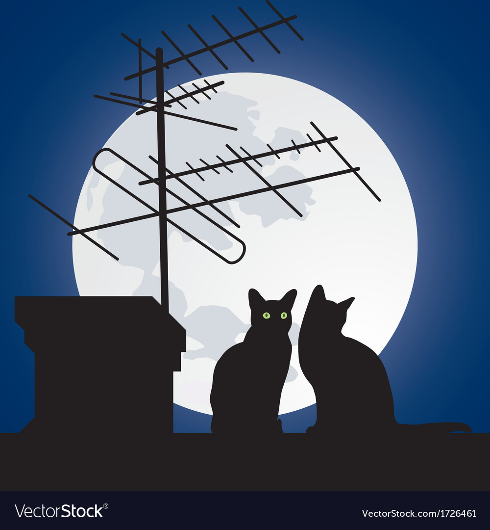 Cats on the roofs vector