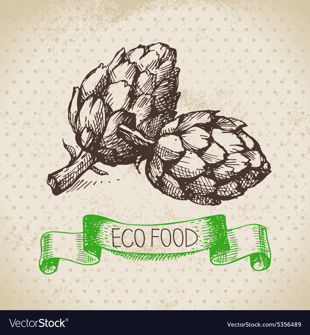 Hand drawn sketch artichoke vegetable eco food vector