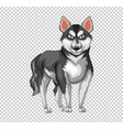 siberian husky dog on transparent background vector image