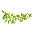 Small tree branch with green leaves vector image