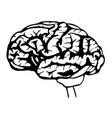 sketch brain vector image