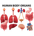 Different type of human body organs vector image