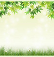 spring meadow with green leaves background vector image