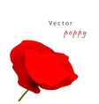 Template card with poppy vector image