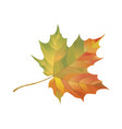 autumn maple leaf isolated on white background vector image
