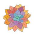 succulent doodle vector image