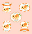 the apricot vector image