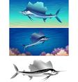 sailfish set vector image vector image