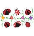 ladybirds pattern vector image