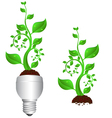 bulb and plant vector image