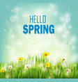 spring background with flowers daisies in grass vector image
