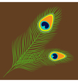 Peacock two feather set collection Exotic tropical vector image
