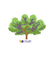 plum garden fruit tree with name vector image