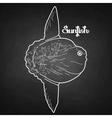 Graphic sunfish vector image