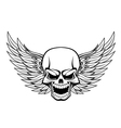 Smiling skull vector image