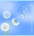 dandelion seeds blowing away on the wind vector image