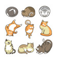 cartoon cats in various positions set on white vector image