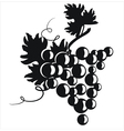 Black silhouette of grapes vector image vector image