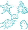 Sea Shells Background vector image vector image