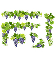 Blue grapes bunch set vector image