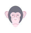 monkey face isolated chimpanzee head primacy of vector image