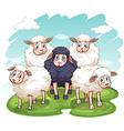 Five sheeps vector image