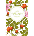 rose hip vertical banner vector image