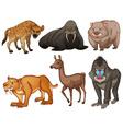Rare animals vector image