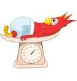 Parrot Schoolboy vector image vector image