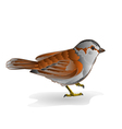 Little bird cub sparrow passer domesticus vector image