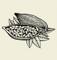 image of cocoa beans vector image