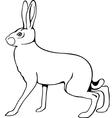 European hare vector image vector image