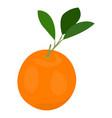 isolated orange fruit vector image
