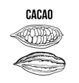 Hand drawn whole and half cacao fruits vector image