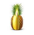 ripe sliced pineapple vector image vector image