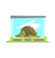 Big Green Turtle Laying Inside Glass Terrarium In vector image