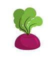beet growing isolated fresh vegetables on white vector image