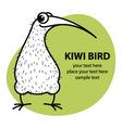 Cartoon kiwi bird vector image