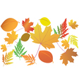 bright autumn leaves vector image vector image