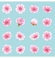 Set of Sakura flowers EPS 10 vector image