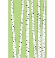birch trunk trees background vector image