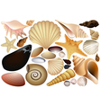 Shell collection vector image vector image