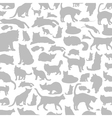 Cat a background vector image vector image