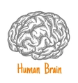 Human brain sketch symbol in gray colors vector image