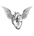 Hand drawn elegant anatomic human heart with wings vector image