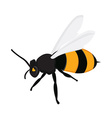 Honey bee c vector image
