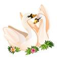 two swans in love tender postcard vector image