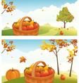 Apple harvest backgrounds vector image